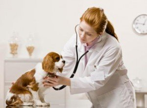 Beginning a Career as a Animal Care & Service Worker
